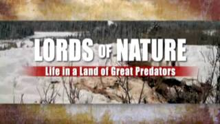 Lord of nature : Life in a land of Great Predators .  part 1