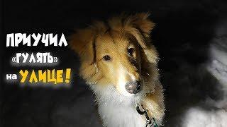 Как приучить собаку к туалету на улице? Сколько весит Шелти в 5 месяцев? Купил новый корм для собаки