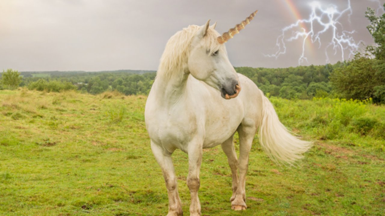 This is a graphic of Magic Picture of Unicorns