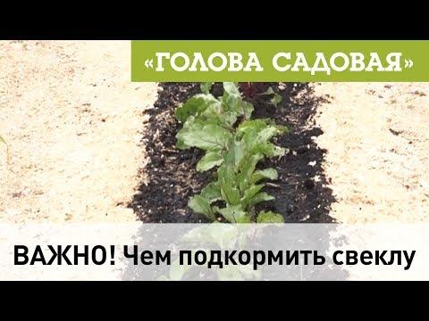 Польза и вред топинамбура, полезные свойства и