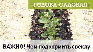 Голова садовая - ВАЖНО! Чем подкормить свеклу