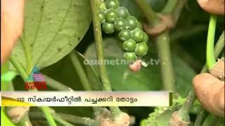 Veg House waves in Kerala തരംഗമാകുന്ന വെജ്ഹൌസ്