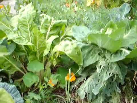 petit tour du potager permaculture fin ao t 2014 youtube