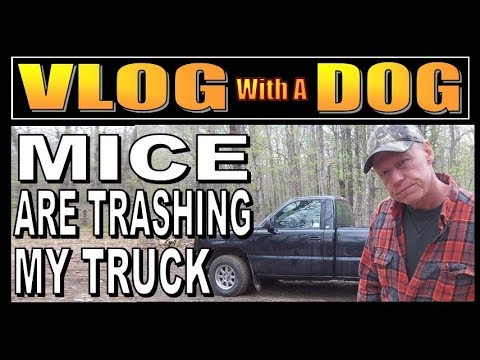 MICE ARE TRASHING MY TRUCK!!!   A Cabin Life Vlog With A Dog