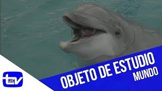 La misteriosa inteligencia de los delfines | Mundo