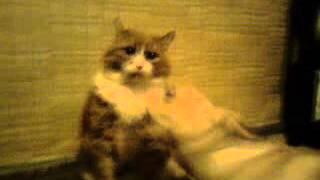 бесстрашный кот и неугомонная собака