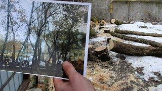 На Хлібній 23 невідомі вирізали дерева: мешканці б'ють на сполох