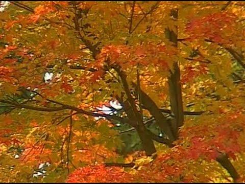 Ontario: Fall Foliage Festival