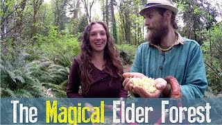 Elderflower Power |  From Folklore to Modern Day Use with Yarrow and Angela Willard | Harmonic Arts
