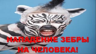 НАПАДЕНИЕ ЗЕБРЫ НА ЧЕЛОВЕКА! ATTACK ZEBRA!