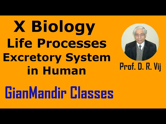 X Biology | Life Processes | Excretory System in Human by Manjit Ma'am