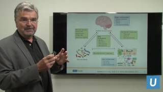 The Mind-Gut Connection: Conversation Within Our Bodies | UCLAMDCHAT Webinars