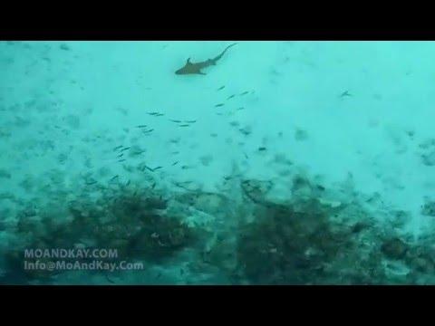MALDIVES TROPICAL PARADISE HD - SHARKS - DOLPHINS - WILDLIFE VIDEO