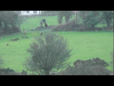 Foxhunting  in Ireland on Foot Lisgold East Cork