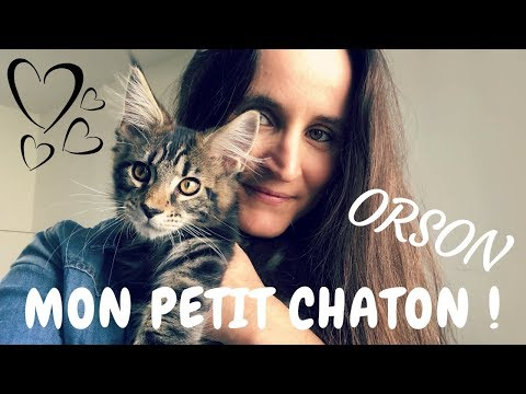 Voici Orson ! Mon petit chaton Maine Coon | VLOG