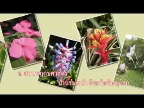 ดอกไม้ในสวนพฤกษศาสตร์บ้านร่มเกล้า