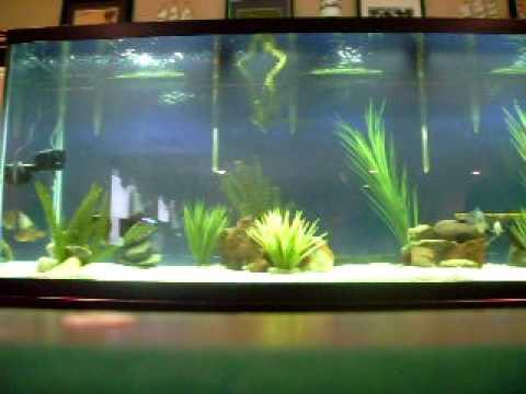 220 gallon fish tank youtube for 220 gallon fish tank