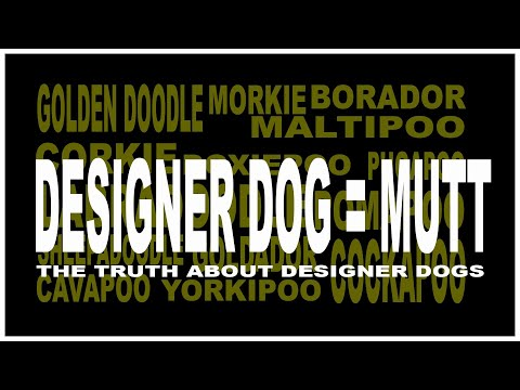 Designer Dogs are Mutts from Puppy mills - Internet Breeders are Puppymills