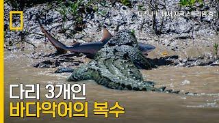 다시만난 바다악어와 황소상어의 대결?