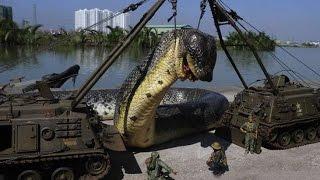 【衝撃】歴史上最大の生物10選 thumbnail