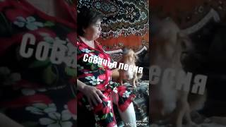 смешное видео)песня собаки))Смотреть всем!