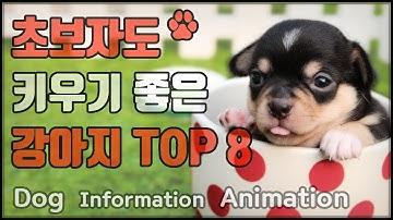 집에서 키우기 좋은(쉬운) 강아지 TOP 8 - 우리나라 인기견 순위