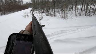 Ketunmetsästystä / Foxhunting 14