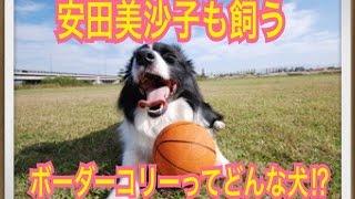 ペットで犬を飼おうと迷っている方へ〜ボーダーコリー〜 世の中には様々...