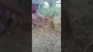 Ali hidar in Saudi arab