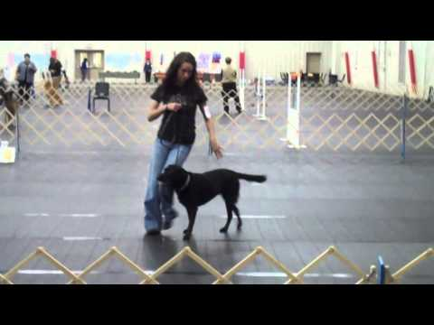 Rally Obedience Novice A