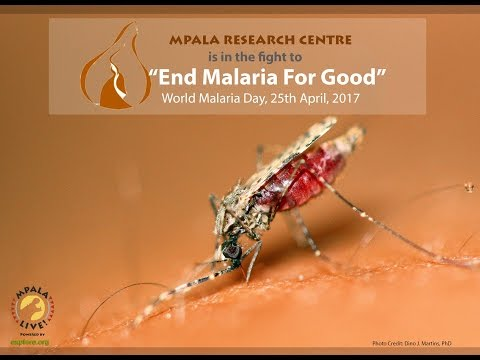 Research, Science & Innovation to Understand Mosquito Biology