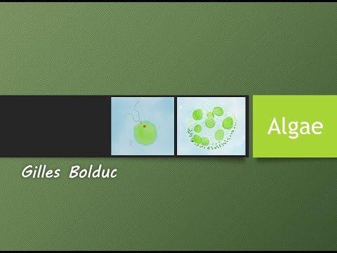 Algae (General Lecture)