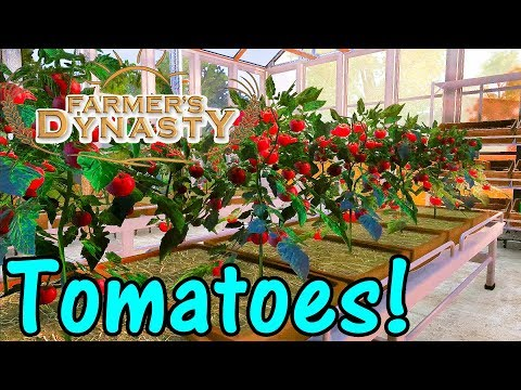 Let's Play Farmer's Dynasty #30: Tomatoes!