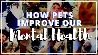 Reasons Owning a Pet Can Improve Your Mental Health