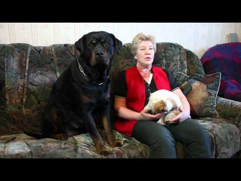 Чем кормить собаку Говорит ЭКСПЕРТ  Сухой корм?