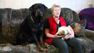 видео Что делать если щенок, собака поносит