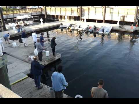 Squid Fishing  Beverly Pier 6/10/2012