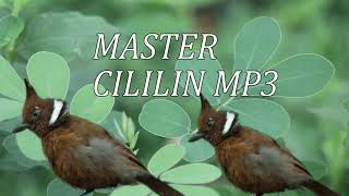 KUMPULAN MASTER AUDIO CILILIN MP3