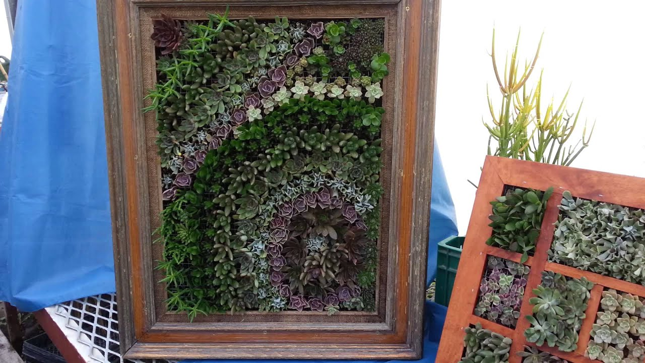 succulents in an old picture frame youtube