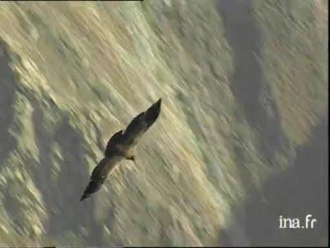 Perou : La Croix du Condor
