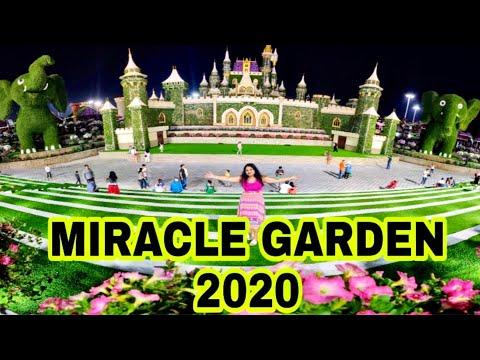 Dubai Miracle Garden 2019 – 2020 | miracal garden 2020 | dubai miracle garden