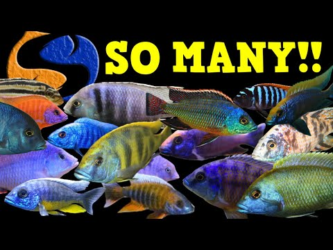 Over Stocking An African Cichlid Tank? Should You Or Shouldn't You? Tank Talk Live!!
