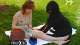 How to Prevent Your Pets from Getting Overheated