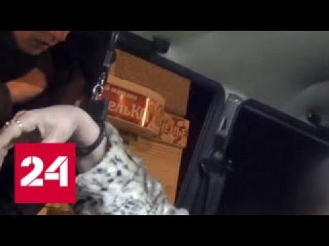 Под Белгородом пьяная автомобилистка напала на инспекторов - Россия 24 - Смотреть видео онлайн
