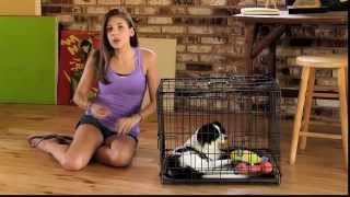How to Potty Train Your Dog REVIEW | DOES IT WORK Potty Train DOG | TOP 1 USER PROOFT Potty Train
