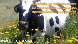 Коровы, лошади и медитация #WoofChannel