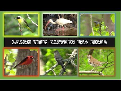 Let's Go Birding!  Identify 84 Eastern United States Birds In 14 Minutes.