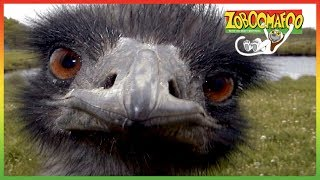 🐵 Zoboomafoo 119 - Running - Animal shows for kids 🐵