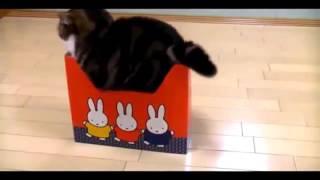 Смешные видео котики  Видео приколы про кошек
