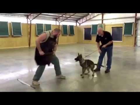 Dog versus Deer ORIGINAL from YouTube · Duration:  4 minutes 10 seconds